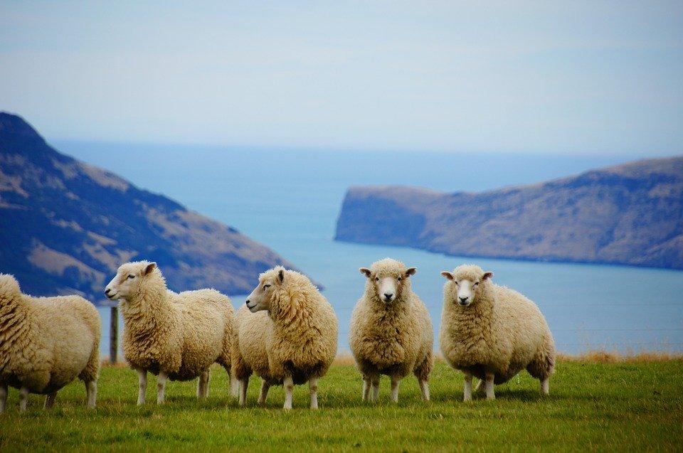 Global_Destination_Review_New_Zealand1.jpg