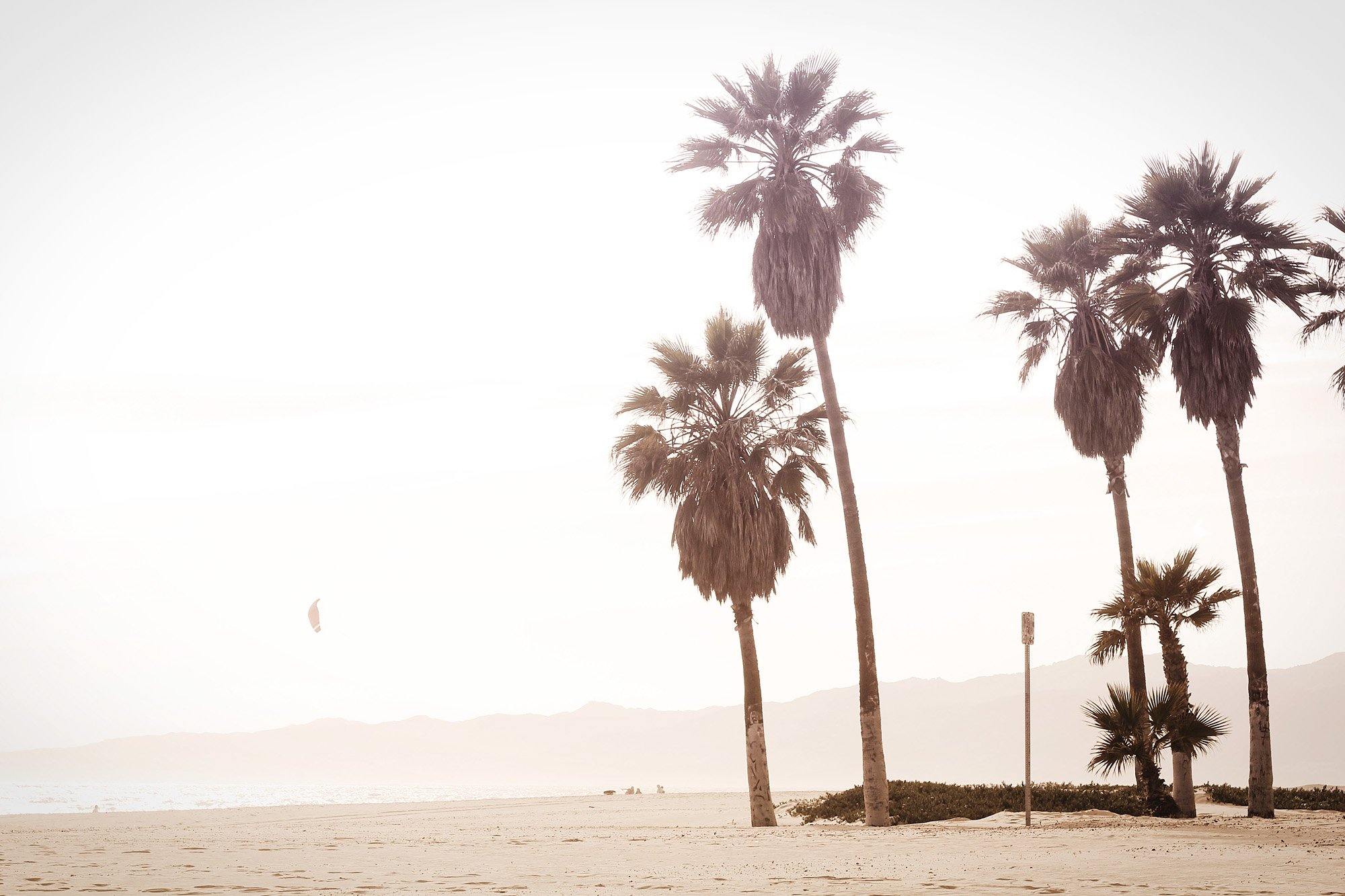 Palm trees and beach of the West Coast of America