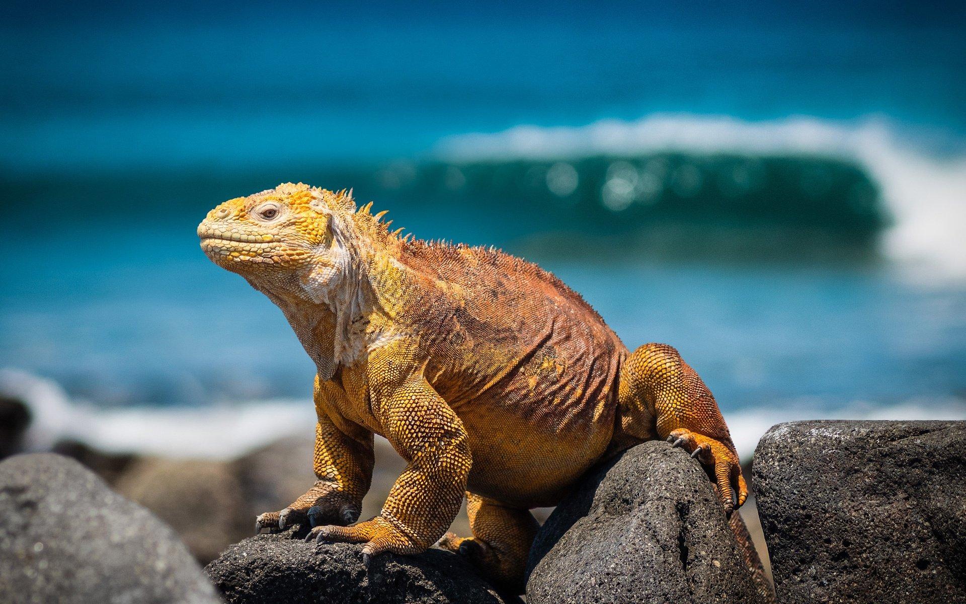 destination-reviews-ecuador-lizard-galapagos