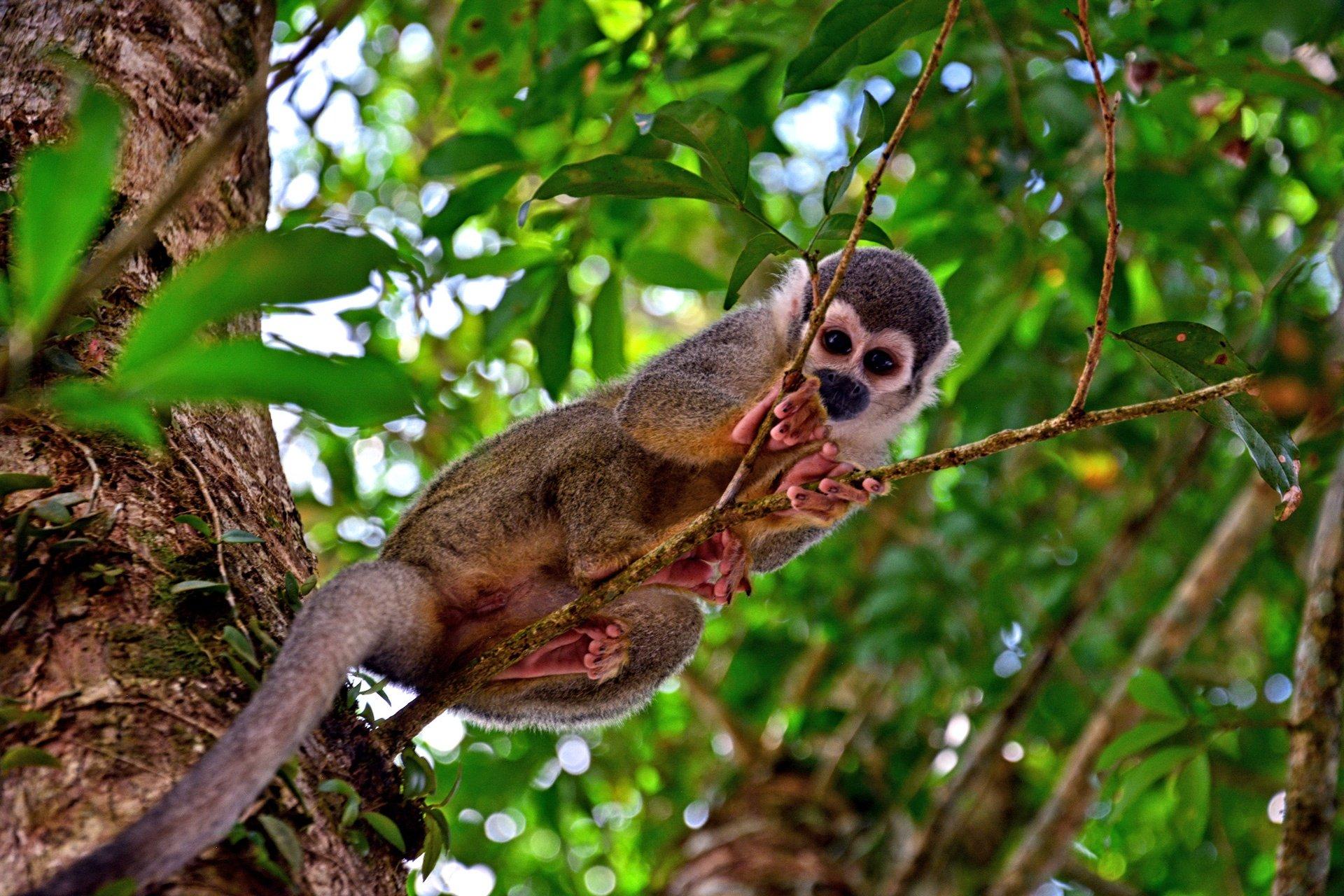 destination-reviews-ecuador-monkey