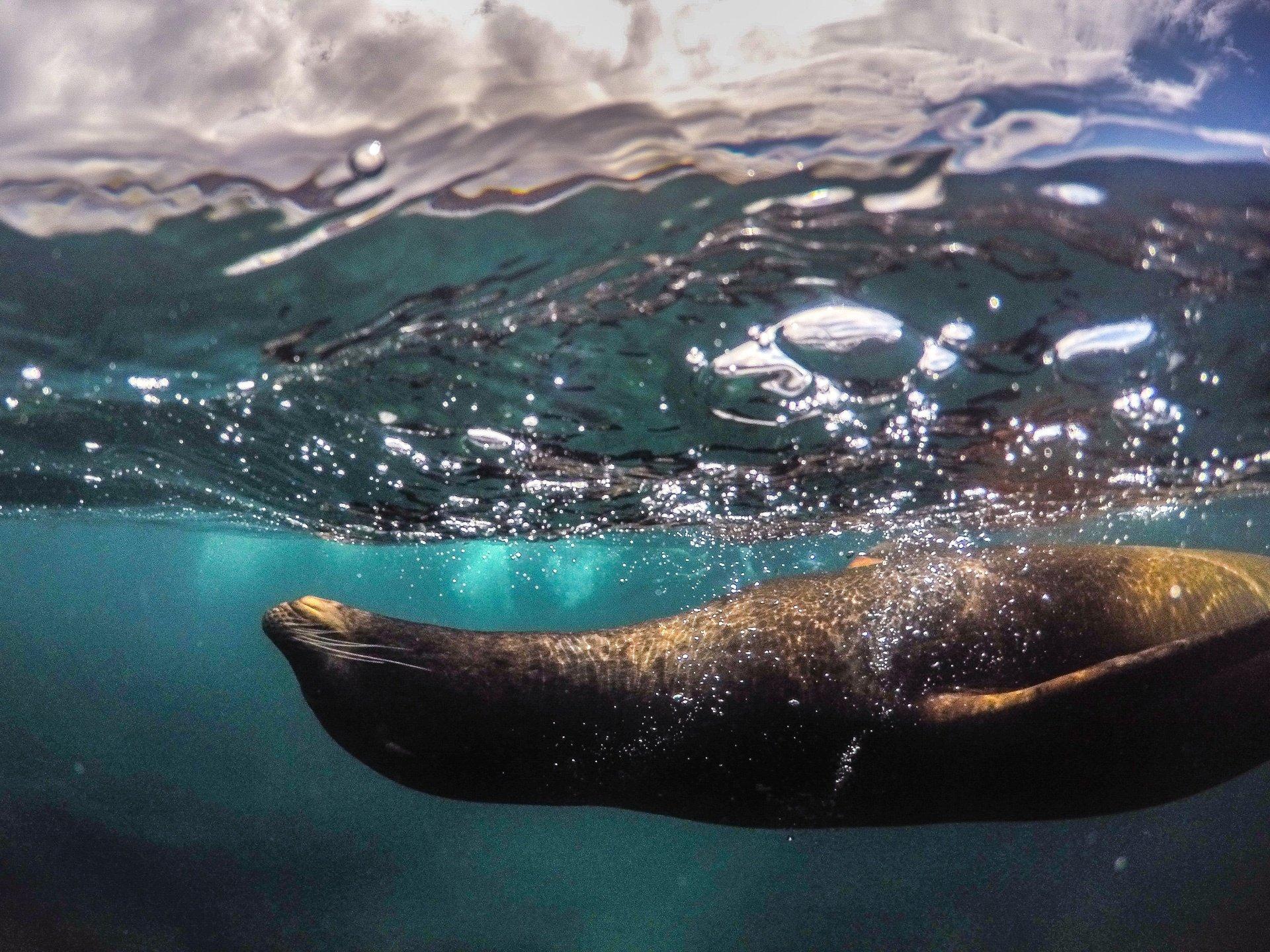 destination-reviews-ecuador-sea-lion-galapagos