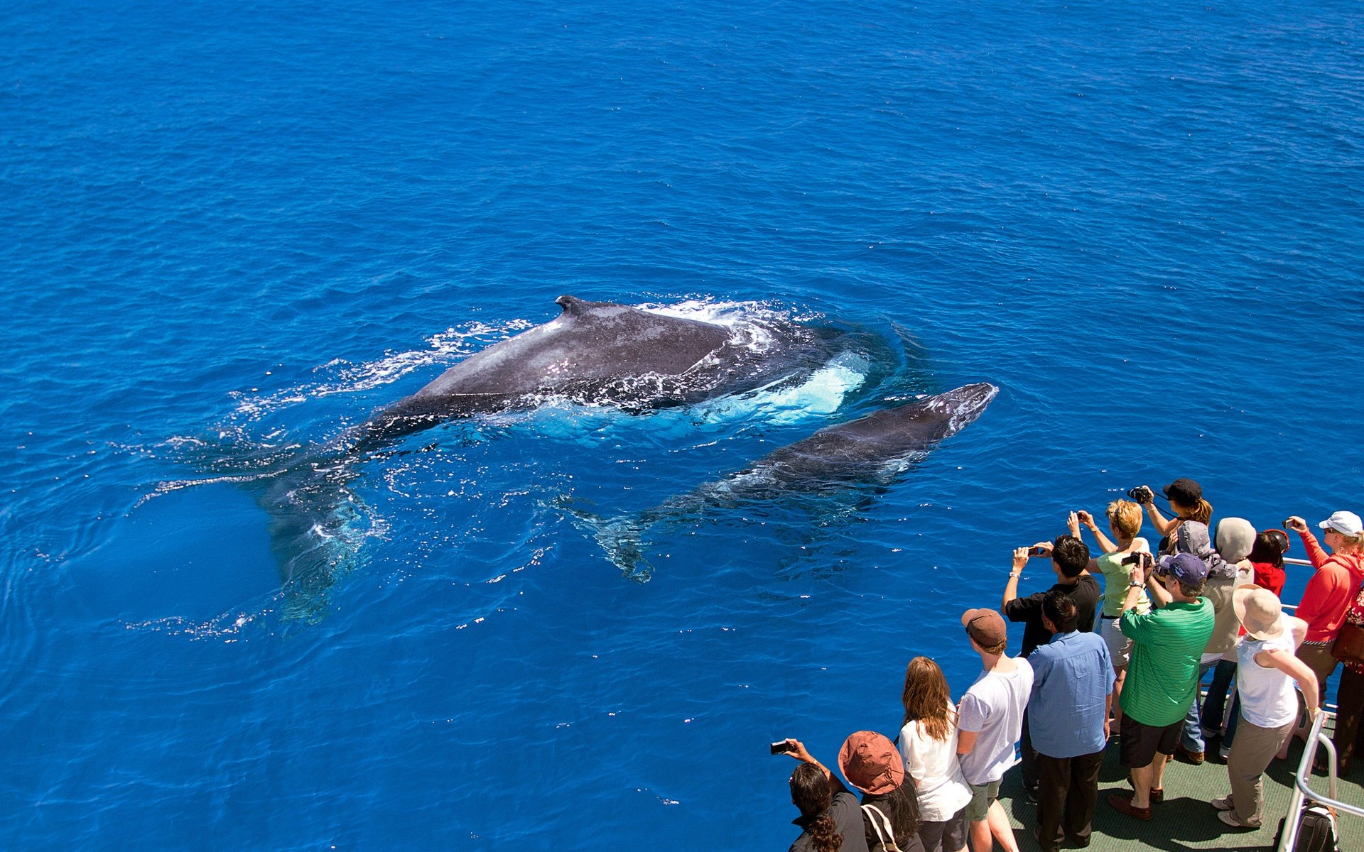 ultimate-aussie-experiences-whale-watching