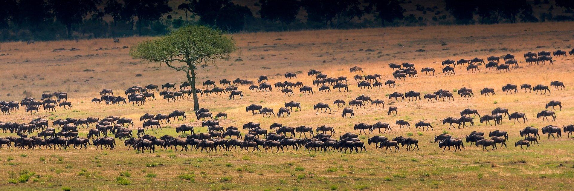 ultimate-tanzania-itinerary-2